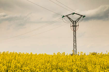 Yellow rapeseed flowers in an extensive field of cultivation, agro-food industry, near Ejea de los Caballeros, in Aragon, Spain, crossed by electricity and high voltage towers. 版權商用圖片
