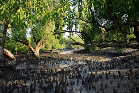 bangladesh: A Morning in Sundarban