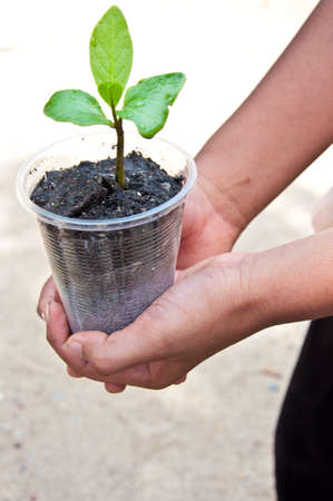 A tree from children hand for environment day photo