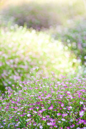 little violet flower and bokeh from nature Stock Photo