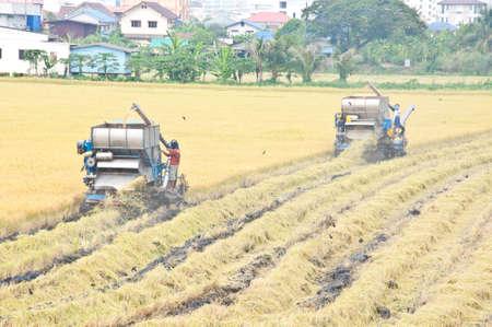 cutting rice machine in the field photo