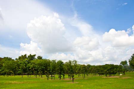 beautiful garden and blue sky