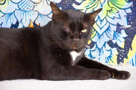inflammatory: close up of black cat with inflammatory eye Stock Photo