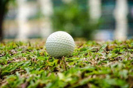 white golf ball on   grass Stock Photo