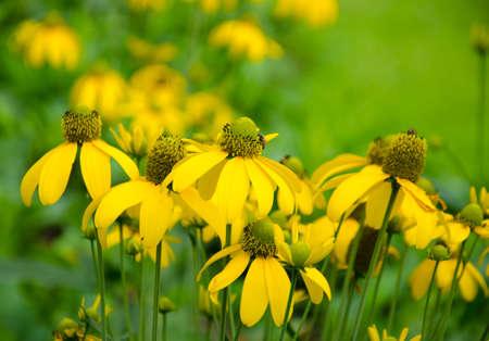 yellow flower in the garden photo