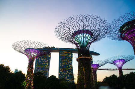 marina bay sand: silhouette of Super tree in Garden by the Bay and Marina Bay Sand Singapore