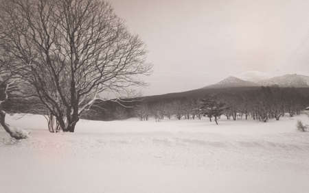 snow on the hill and forest in Japan Stock Photo