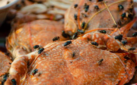 fly on food carrier food poinsoning and disease Stok Fotoğraf