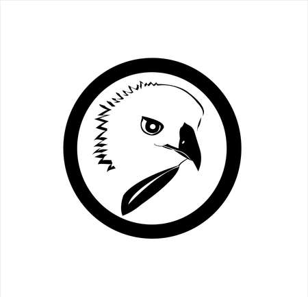 bird animal vector of eagle logo and falcon head with hawk design of creative mascot