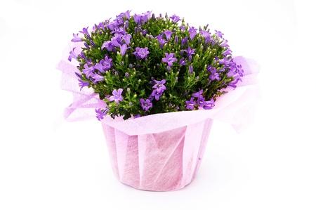 Photo of flowers vase isolated on white background