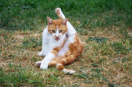 Portrait of a funny cat Zdjęcie Seryjne - 9428028