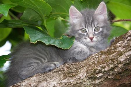 Photo of a little cat