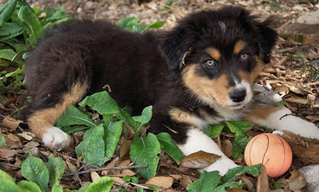 Portrait of sweet puppy dog