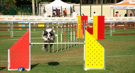Agility dog competition in Bevagna Stock Photo - 11786874