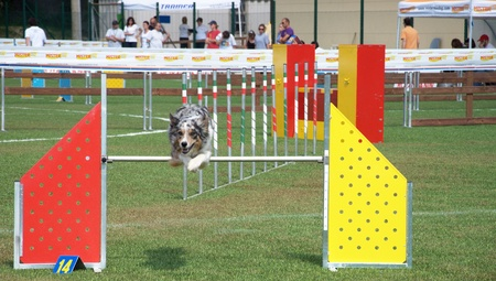 Dog jumping over obstacle in agility competition Stock Photo - 11786880