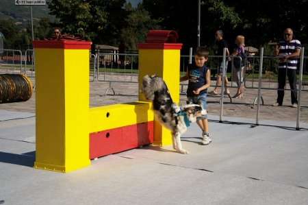 A little competition of agility dog