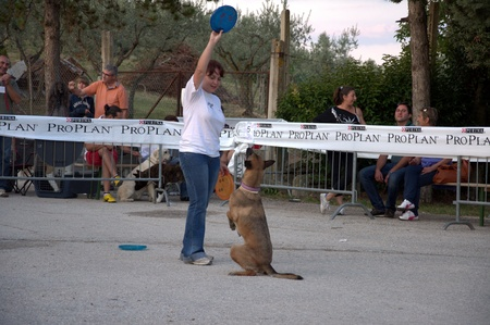 Dog prepare to jump for frisbee disc