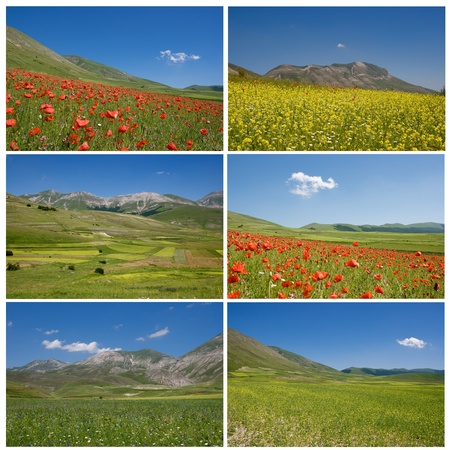 A collage with flowers images
