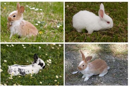 Four photos of rabbits Stock Photo