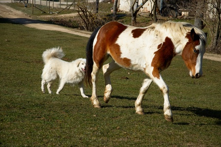 Horse and white big dog in the meadow Stock Photo