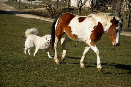 Horse and white big dog in the meadow Zdjęcie Seryjne