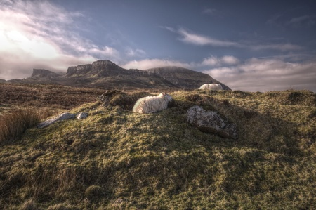 Typical Scottish landscape with sheeps Stock Photo