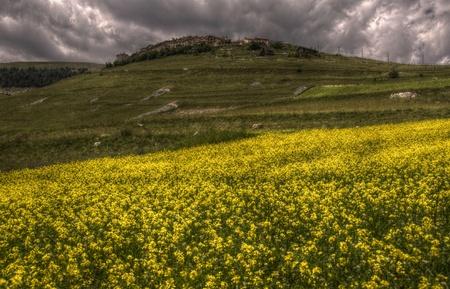Lentils flowers in Castelluccio di Norcia Stock Photo - 12269499