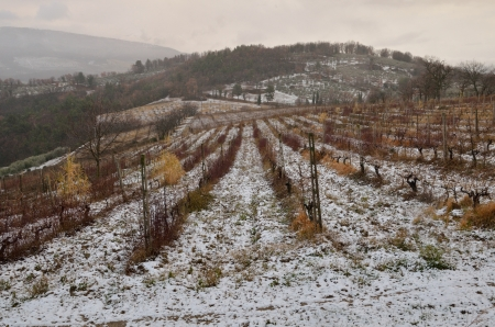 View of a vinyard in the snow photo