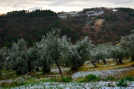 umbria: Rural scene in Umbria