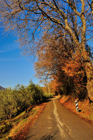 The road in autumn Stock Photo