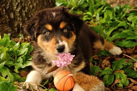 Puppy dog with pink flower