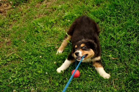 Baby dog playing with the ball