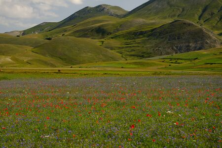 castelluccio di norcia: Them mountains with many flowers Stock Photo
