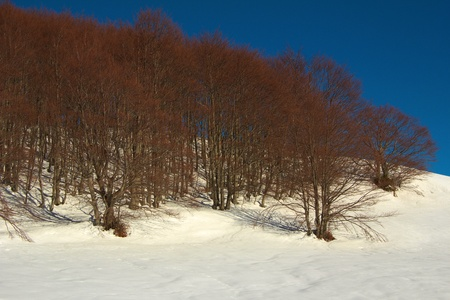 Forest on the snow photo
