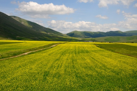 Lentils field in the umbria region Stock Photo