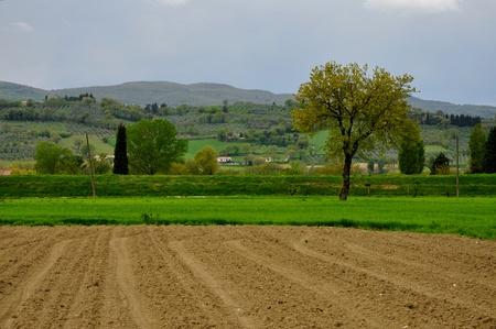 bevagna: Umbria landscape near Bevagna