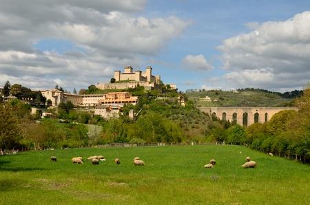 Spoleto landscape with sheeps