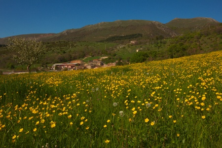 Little village with yellow flowers Stock Photo - 13497869