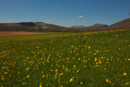 appennino: Field with yellow flowers
