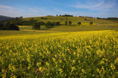 Umbria country with yellow flowers photo