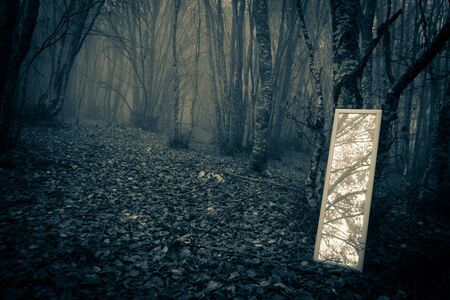 ambient: Little mirror in the misty forest Stock Photo