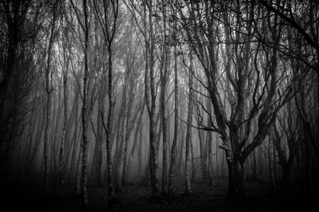 Forest in black and white  photo