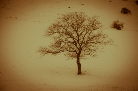 One solitary tree in mountain with snow Stock Photo