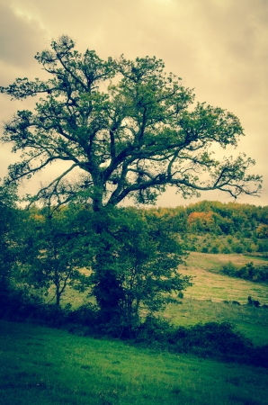 appennino: One big tree in the mountain