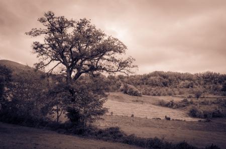 Umbria landscape in the autumn season
