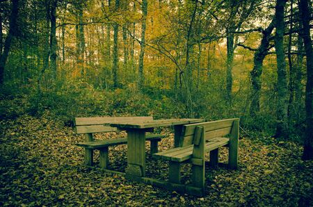 Table for pic nic in the forest Stock Photo - 16793652