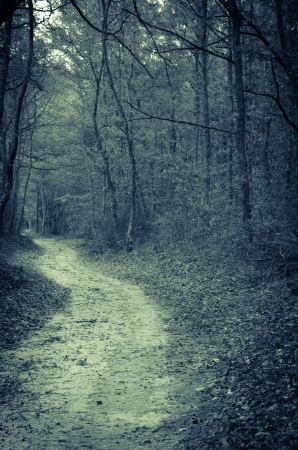 Road in the magic forest