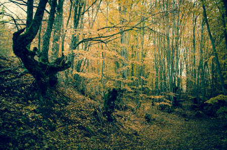 Old trees in the italian appennino Stock Photo - 16793650