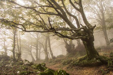 gnomos: Camino rodeado de niebla. Foto de archivo