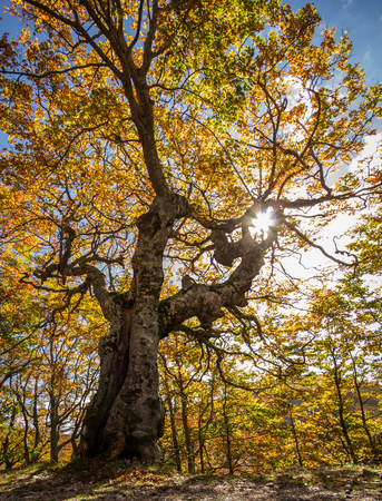 appennino: Ray of sun on the tree branches